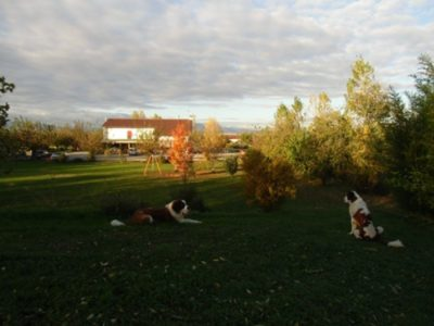 Parco recintato con cani